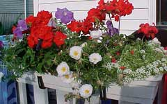 flower box on the railing